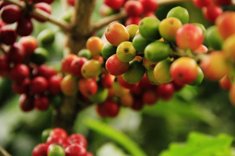 coffee-1474601